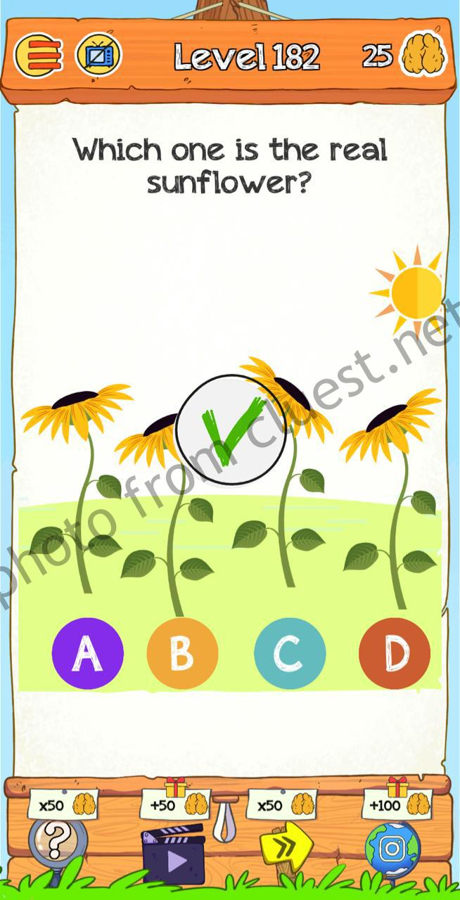 Braindom 2 Level 182 Which One Is The Real Sunflower Answers And Solutions Cluest